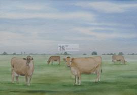 Jersy koeien aquarel schilderij