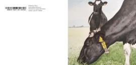 koeien wenskaart