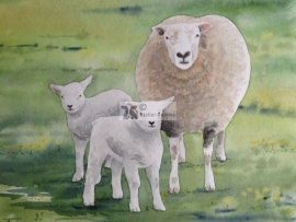 Sheep and lambs watercolor painting
