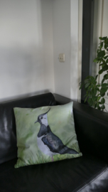 Pillow lapwing