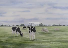 Koeien en schapen aquarel