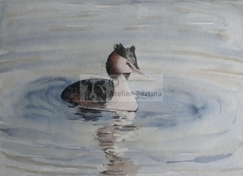 Grebe watercolor painting