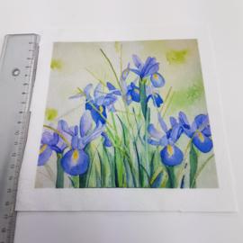 Iris  stofje 15 cm