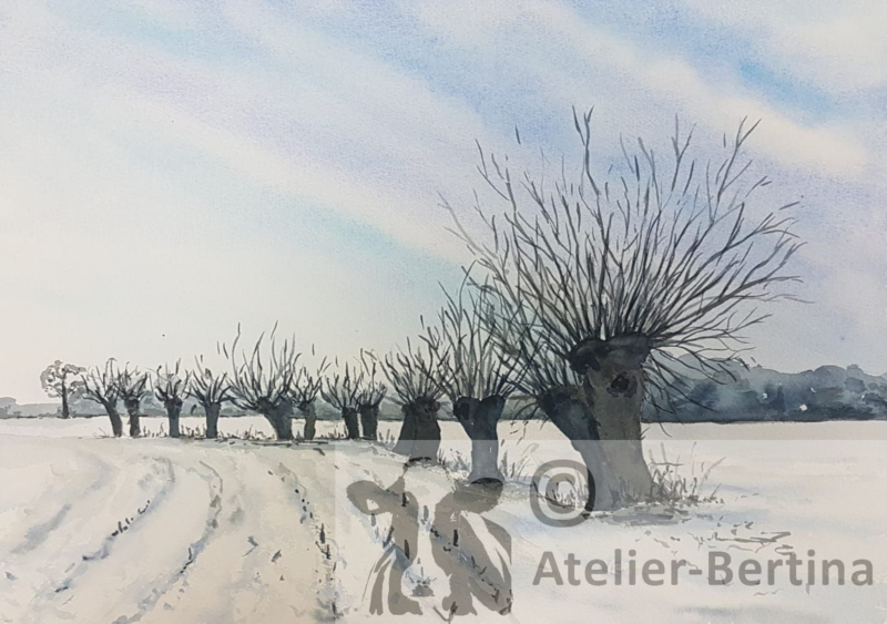 Wilgen in de winter