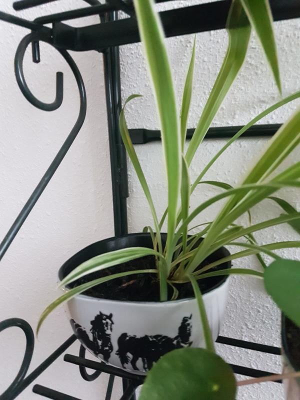 Plant met paarden pot