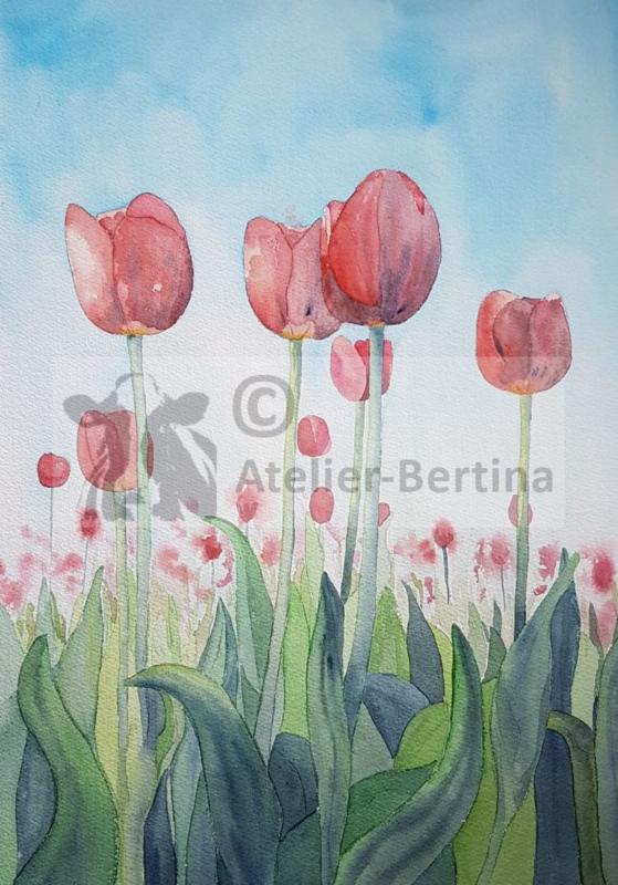 Tulpen veld rood aquarel schilderij