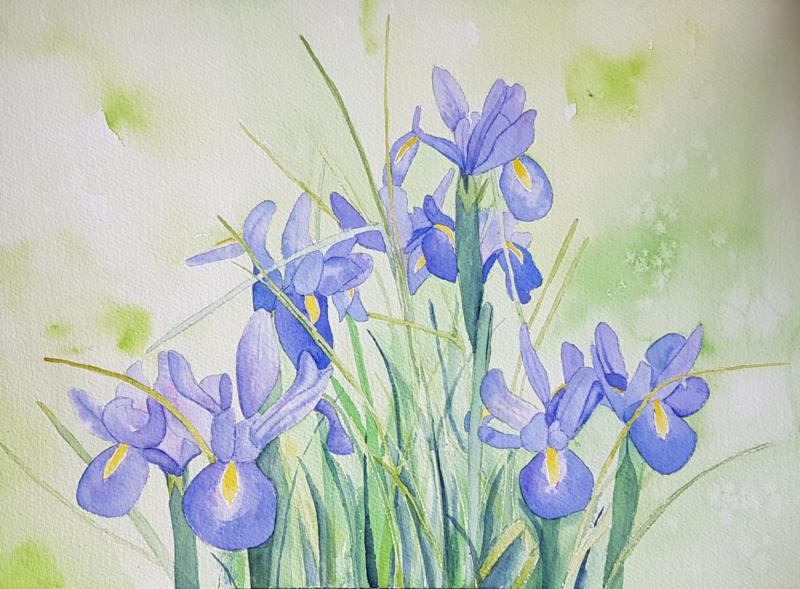 Iris tuinposter