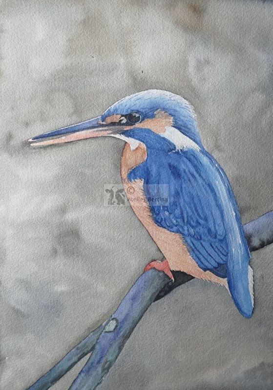 Ijsvogel aquarel schilderij