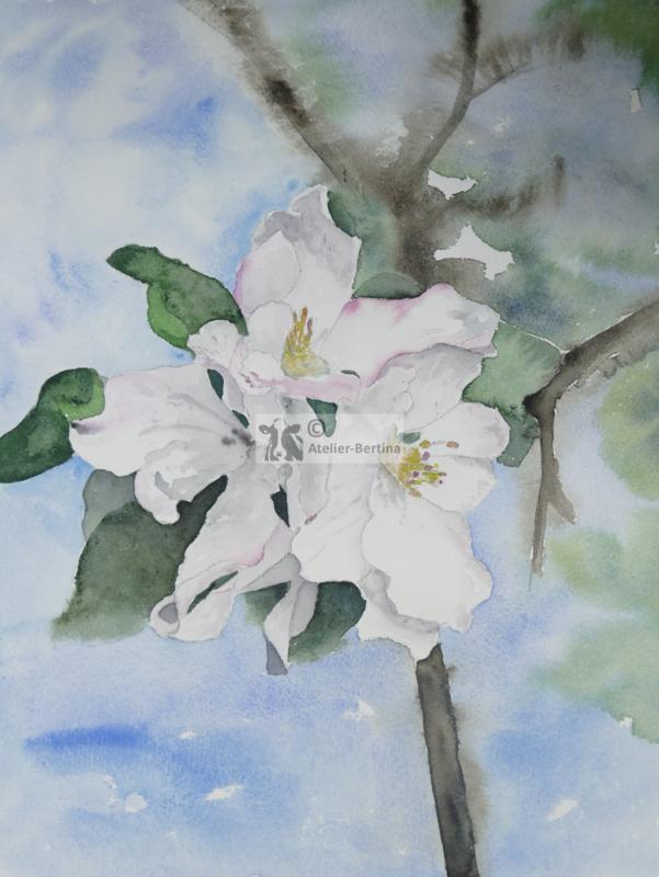 Appelbloesem aquarel schilderij