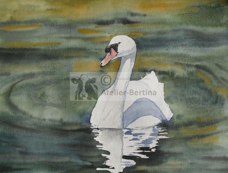 Swan watercolor painting