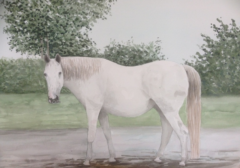 Horse watercolor painting