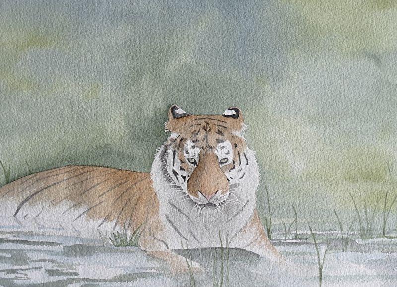 Tiger Aquarellmalerei.
