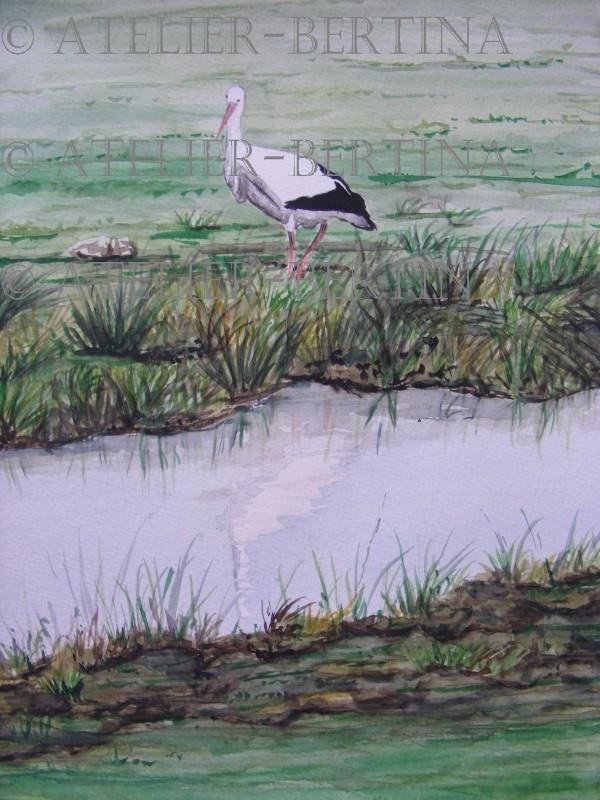 Stork watercolor 2011
