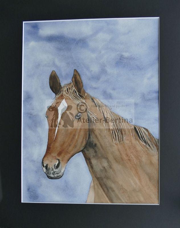 Paard aquarel schilderij