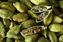 Tinctuur: Kardamom Ø  -  Elettaria cardamomum - 100 ml