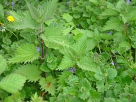 """Brandnetel (blad), """"Urtica dioica"""" - biologisch 25 gram"""