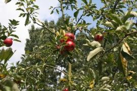 Appelstukjes (vrucht) - 10 gram
