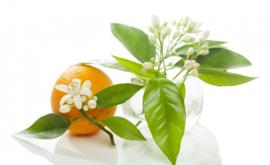 Tinctuur: Oranjebloesem Ø  -  Citrus aurantium - 100 ml