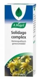 A. Vogel Solidago complex