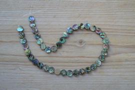 Abalone schelp platte muntjes ca. 10 mm