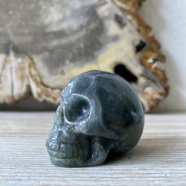 Labradoriet schedel