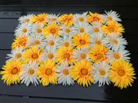 Flowerwall/bloemenpaneel 40x60 gerbera's