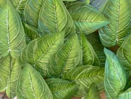 Kunstblad hosta groen met witte nerf 18x12 cm