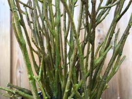 Kunsttakken groen, 55 cm hoog, decoratie materiaal
