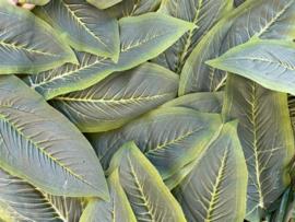 Kunstblad dieffenbachia twee kleuren groen 28x11 cm