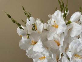 Kunstbloemen gladiolen wit 48 cm