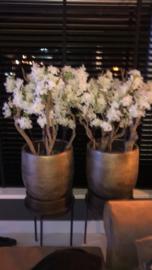 Bloesembomen/bloesemtakken witte bloesem