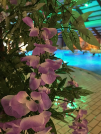 Kunstbomen/kunstplanten subtropisch zwemparadijs, goudenregen lila 180 cm