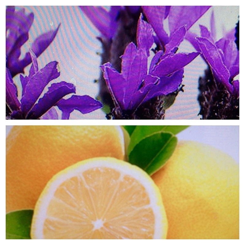 Crema balsamico Lavendel&citroen