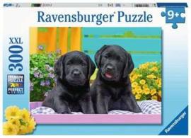 Zwarte Labradors (300 XXL)