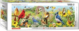 Garden Birds - Greg Giordano Panorama (1000)