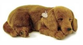 Knuffel voor mensen met Alzheimer of Dementie, hond Teckel