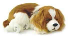 Knuffel voor mensen met Alzheimer of Dementie, hond Cavalier King Charles