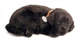 Knuffel voor mensen met Alzheimer of Dementie, hond Labrador zwart