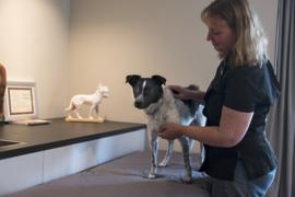 Jin Shin Jyutsu  behandeling voor dieren 60 minuten