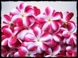 XL-bloem - `Hawaï` - fuchsia zijde - 7 cm.
