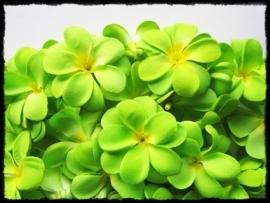XL-bloem Hawaï - groen zijde - 7 cm.