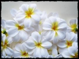 XL-bloem Hawaï - wit zijde  - 7 cm.