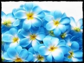 XL-bloem - `Hawaï` - blauw zijde - 7 cm.