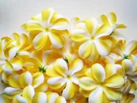 XL-bloem - `Hawaï` - geel zijde - 7 cm.