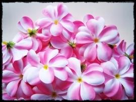 XL-bloem - `Hawaï` - roze/wit zijde - 7 cm.