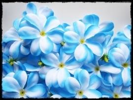 XL-bloem - `Hawaï` - blauw / wit  zijde - 7 cm.