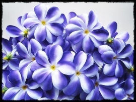 XL-bloem - `Hawaï` - paars zijde - 7 cm.