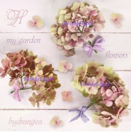Servetten Hortensia Nr. 2