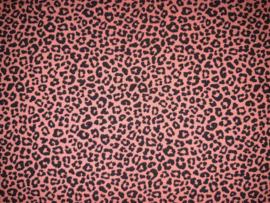 4419 - Leopard meisjes jurkje