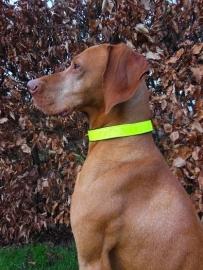 reflectie honden halsband